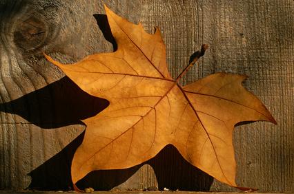 Casual Autumn Friday