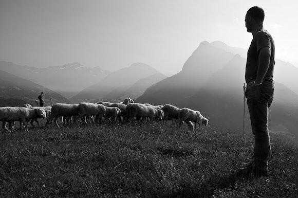 Shepherds after God's heart